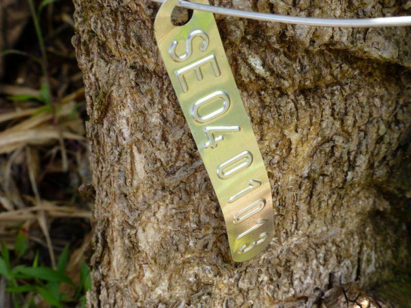 Februar 2014 | Life Forestry Plantagen